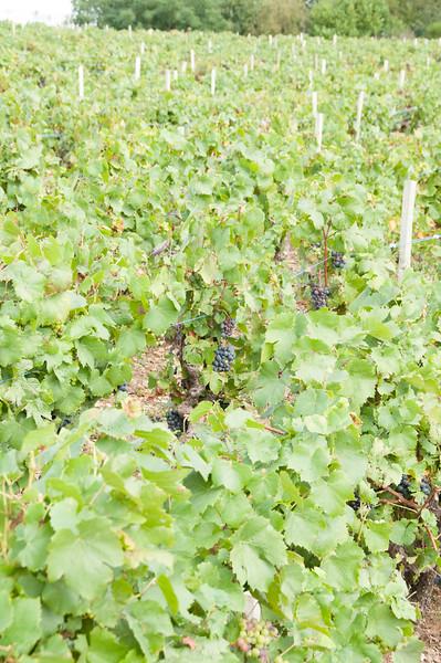 Charles Hastings Wine Club - Beaujolais 2012-2