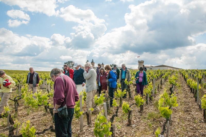 Walking in the vines of Cos d'Estournel