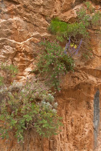 2010-April-25-Imbros Gorge-68