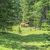 Through the woods towards the Refugio Citta di Carpi
