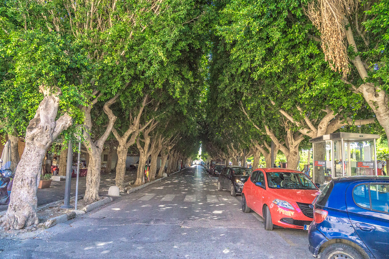 Tree lined avenue at Noto