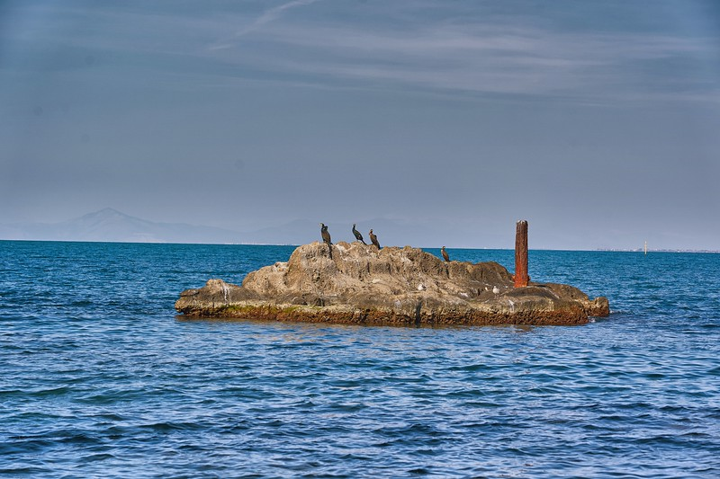 Cormorants on islet