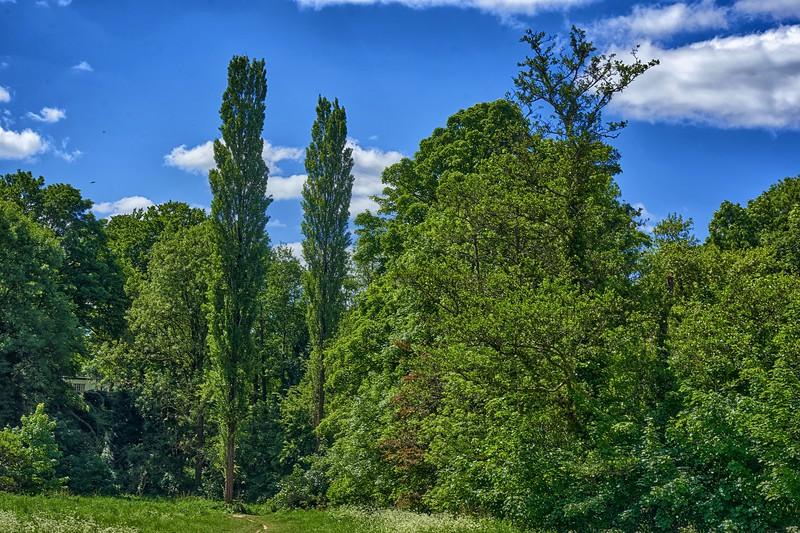 Henbury Golf Course Walk