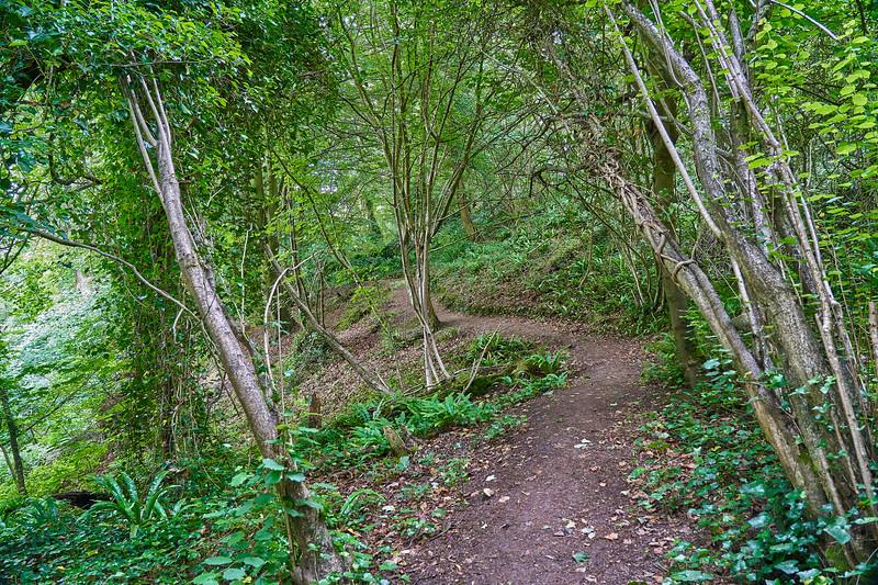 Rownham Woods