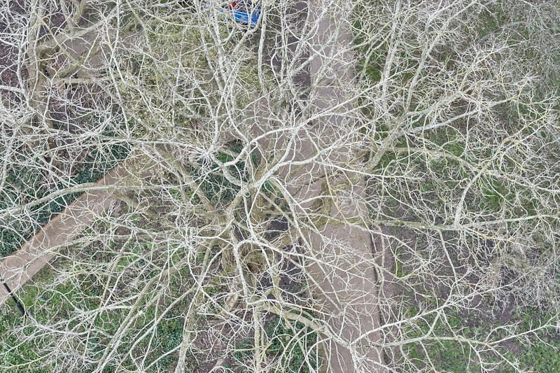 Tree branches, from above