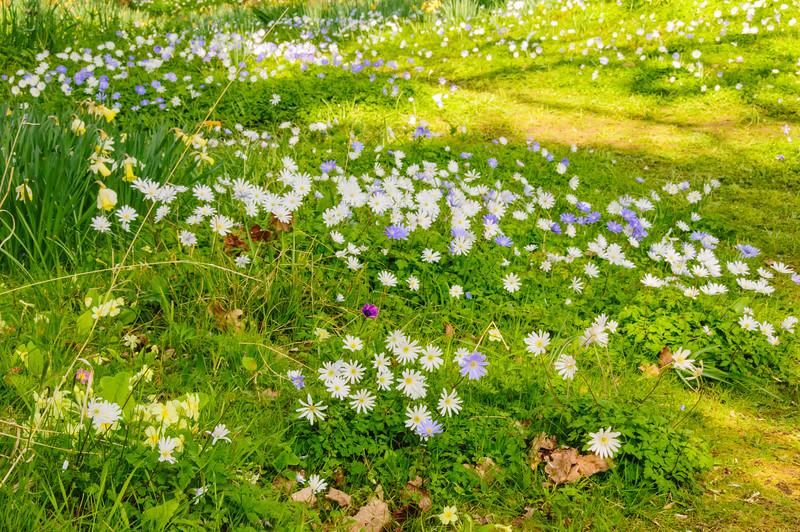 Bristol University Botanic Garden-7