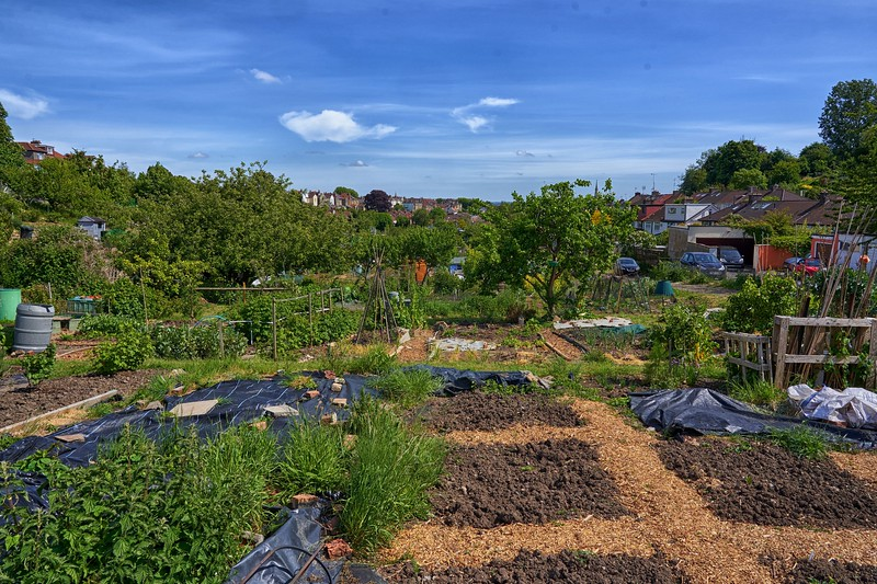 Allotment Walk