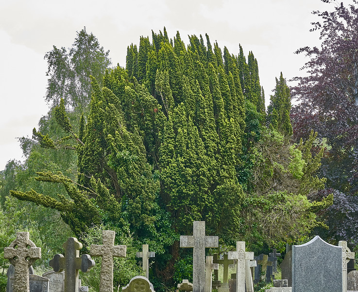 Canford Cemetery.