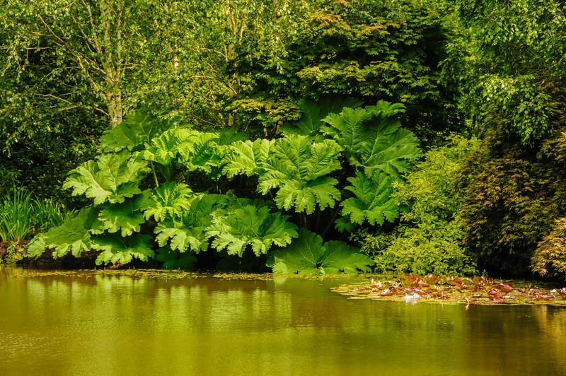 Rosemoor Garden-32