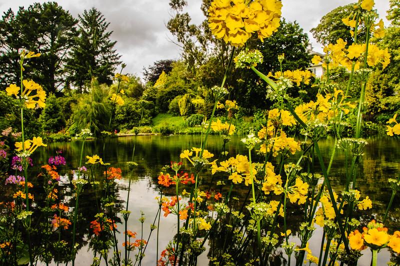 Marwood Garden-30