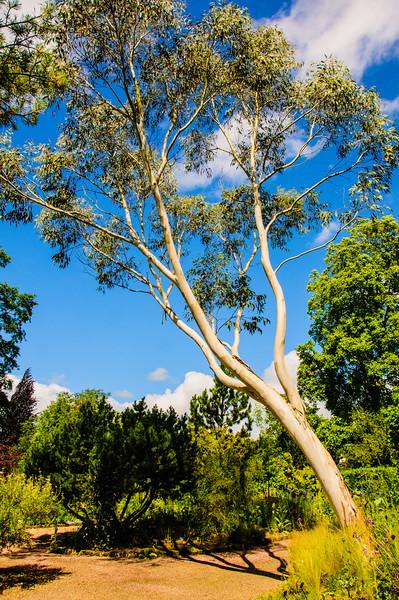 Rosemoor Garden-36