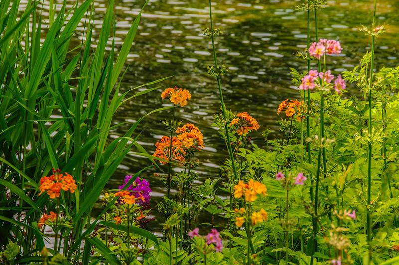 Marwood Garden-4