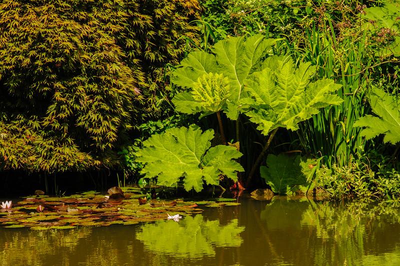 Rosemoor Garden-31