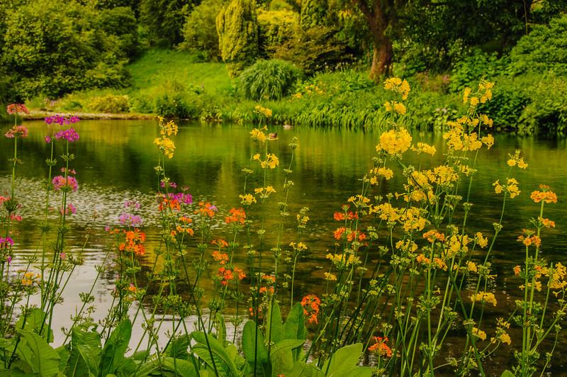 Marwood Garden-29