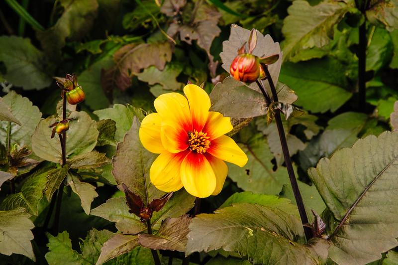 Rosemoor Garden-24