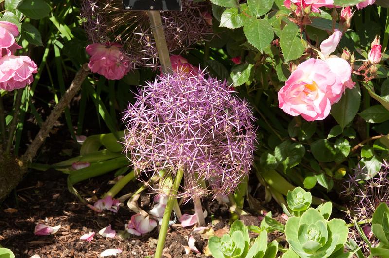 Rosemoor Garden-22