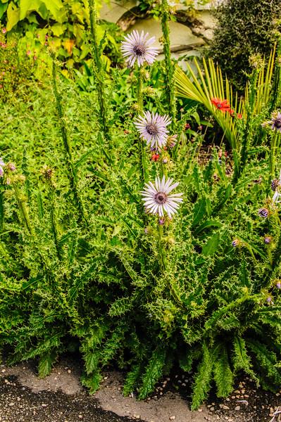 Rosemoor Garden-41