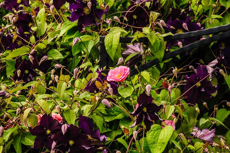 Rosemoor Garden-14