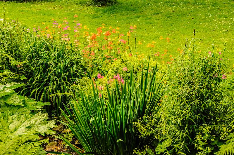 Marwood Garden-34