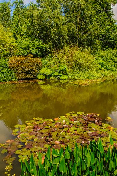 Rosemoor Garden-30