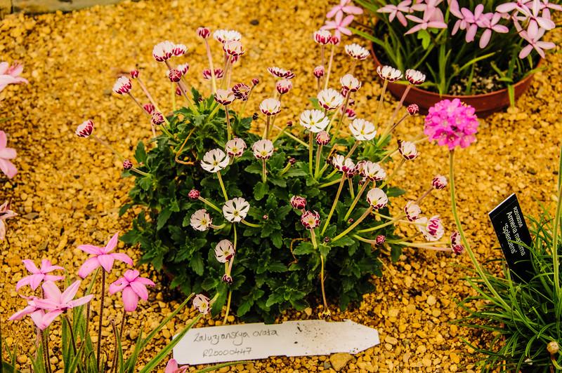 Rosemoor Garden-6