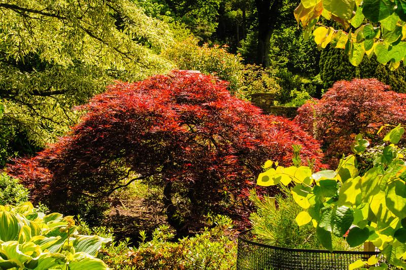 Rosemoor Garden-37