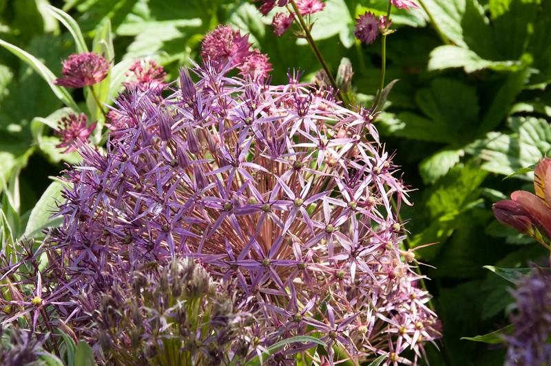 Rosemoor Garden-20