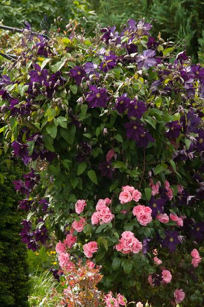 Rosemoor Garden-12