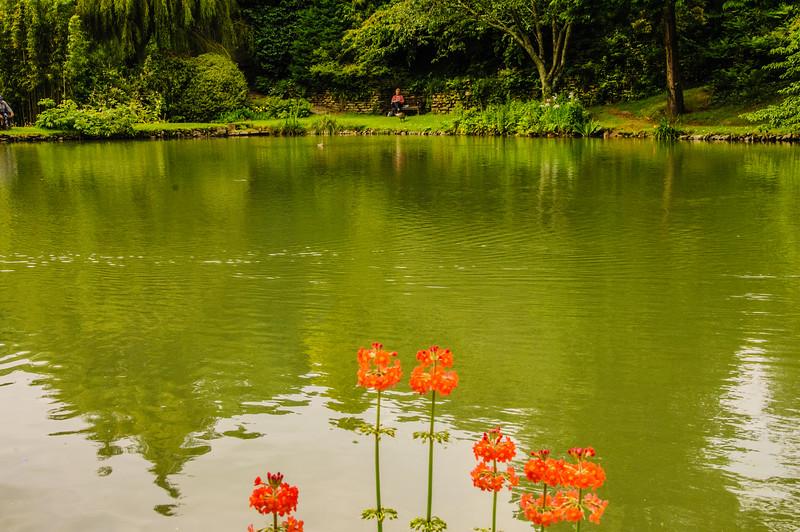 Marwood Garden-33