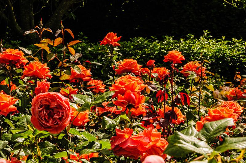 Rosemoor Garden-16