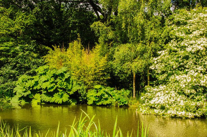 Rosemoor Garden-33