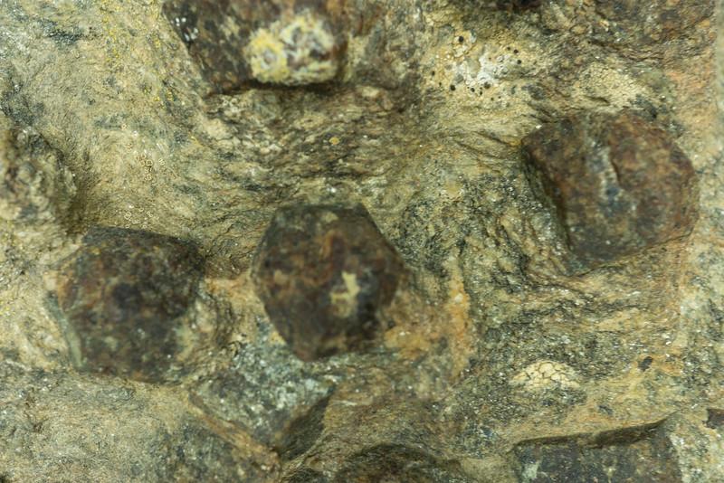 Garnet phenocrysts in phengite