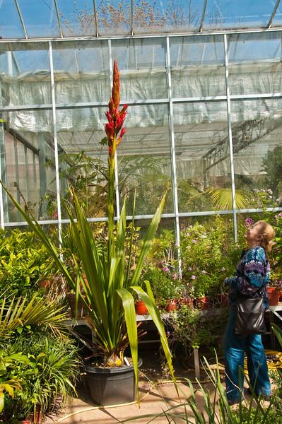 2010-April-21-Bristol Botanic Garden-6