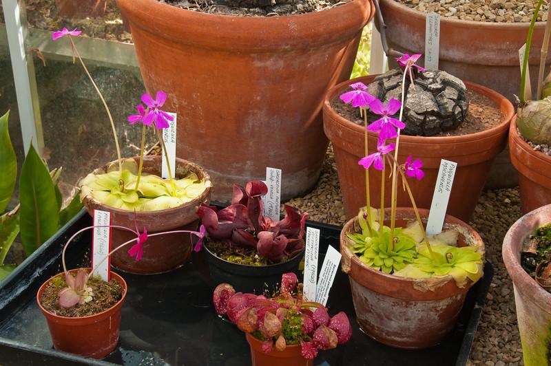 2010-April-21-Bristol Botanic Garden-11