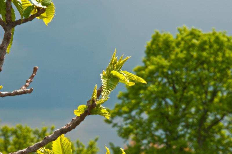 2010-May-15-Kew-24