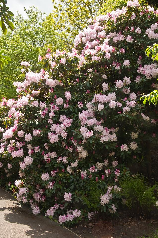 2010-May-15-Kew-39