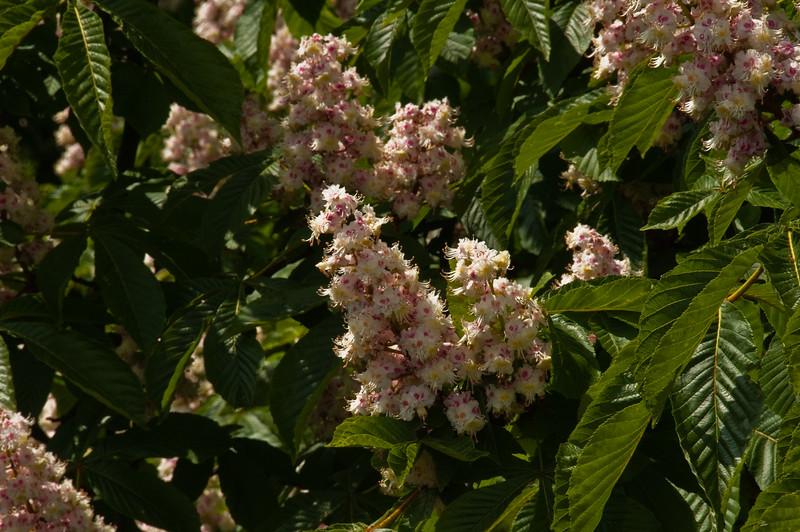 2010-May-15-Kew-32