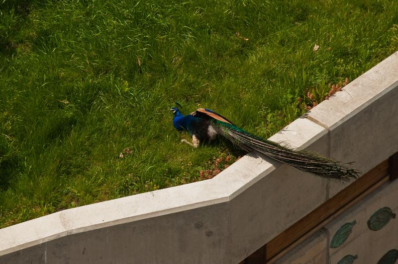 2010-May-15-Kew-22