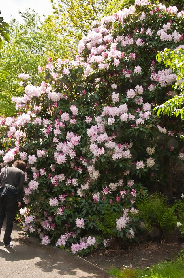 2010-May-15-Kew-38