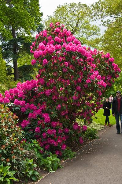 2010-May-15-Kew-40