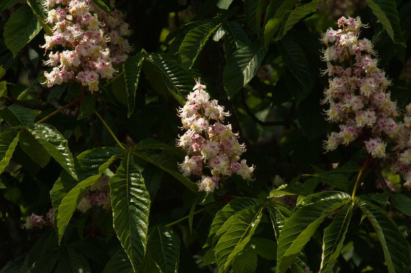 2010-May-15-Kew-31