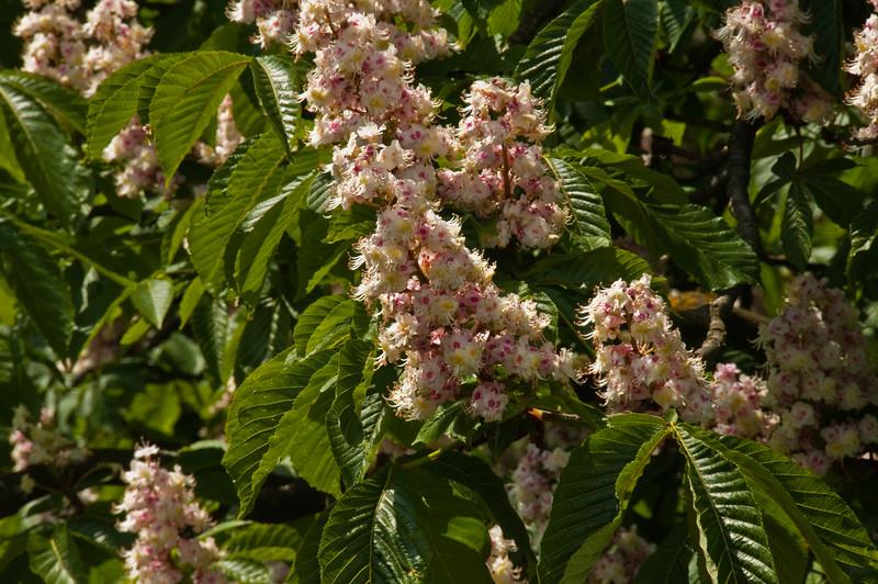 2010-May-15-Kew-30