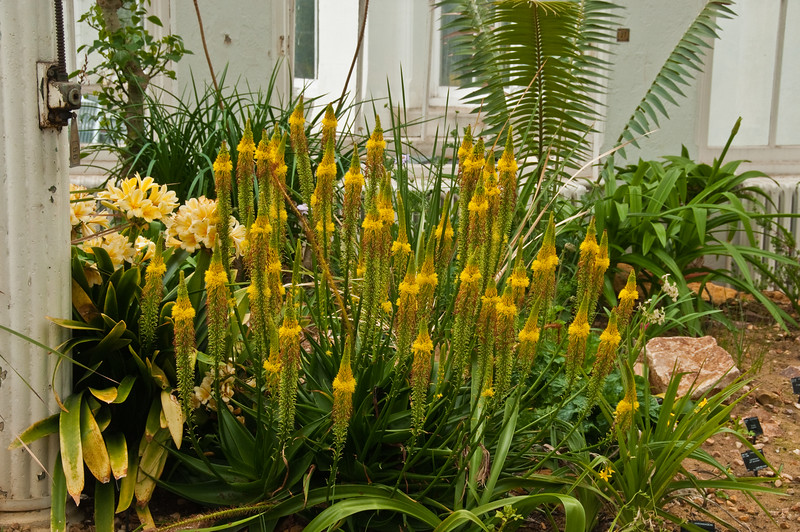 2010-May-15-Kew-15