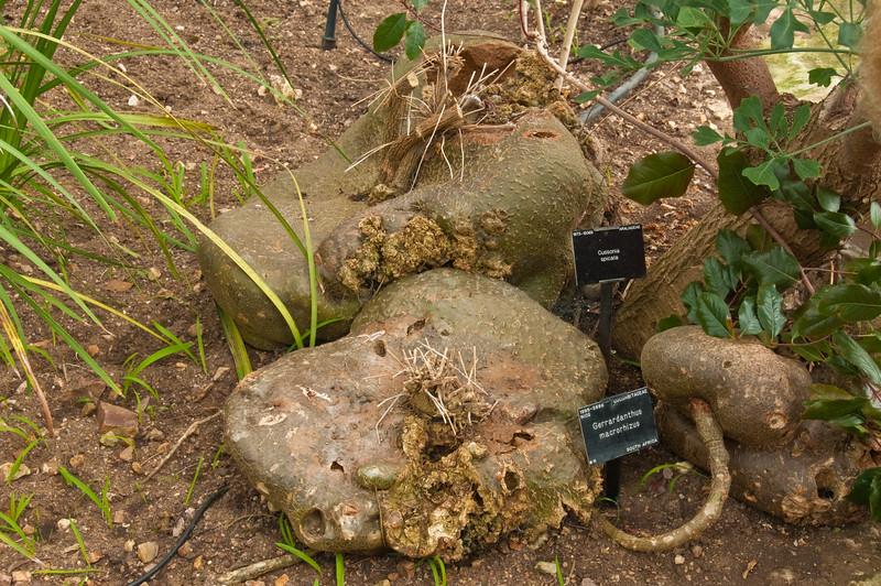 2010-May-15-Kew-12