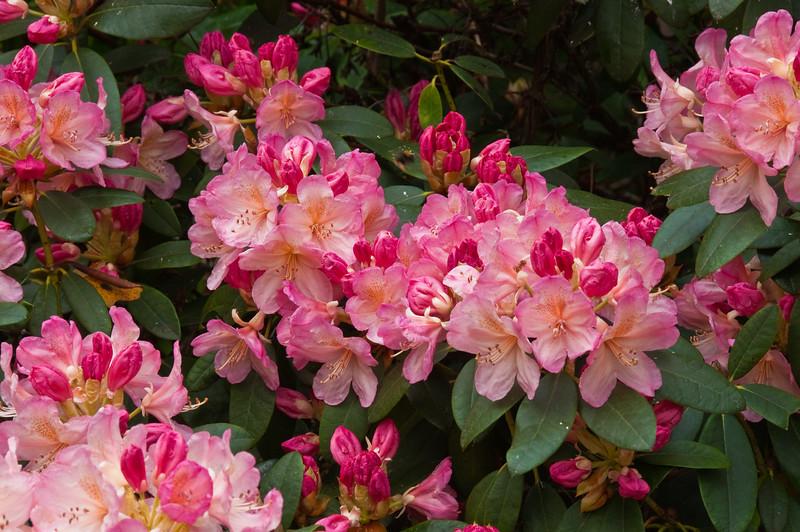 2010-May-15-Kew-42