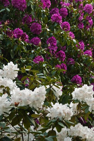 2010-May-15-Kew-41