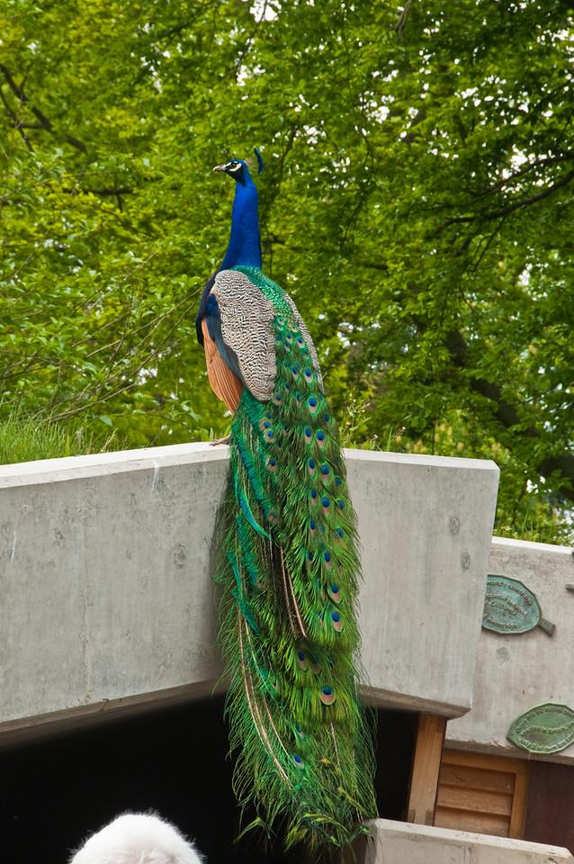 2010-May-15-Kew-20
