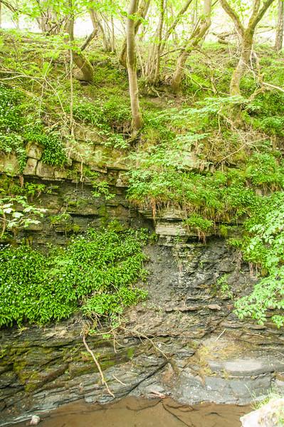 Slitt Wood and West Rigg