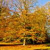Westonbirt Arboretum-27
