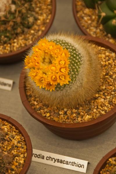 2010-May-08-Malvern spring flower show-20